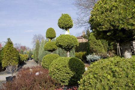 topiary: Topiary shapes