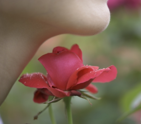 Woman with roses Imagens