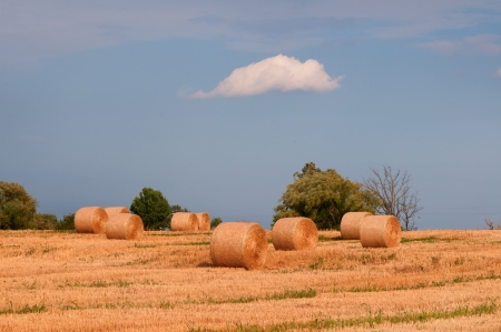 Field with hay and beauty sky photo