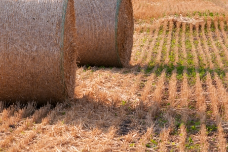 canada agriculture: Field with hay and beauty sky