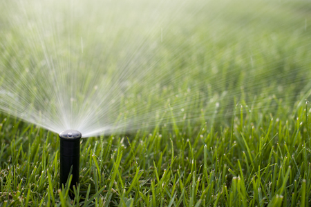 Grass Sprinkler photo