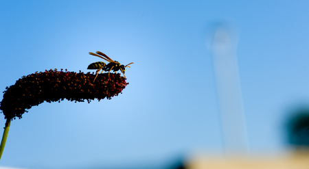 Honey Bee Stock Photo - 23083659