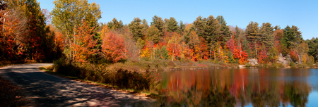 Fall forest reflections photo