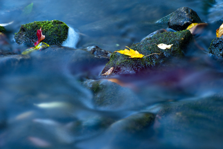Maple leaf in waterfall photo