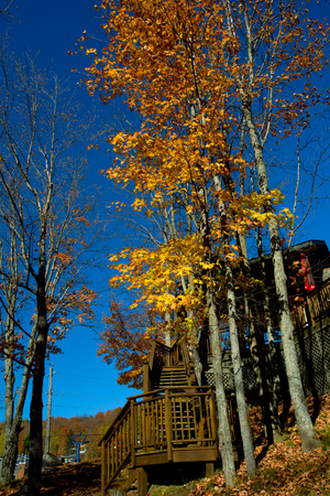 overhanging: Rowhouse Porches in Autumn
