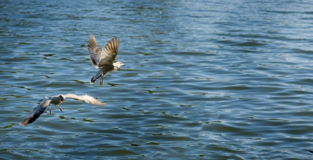 webbed foot: Spread your wings
