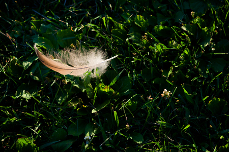 White feather on green background  Stock Photo