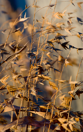 Morning light on blades of grass photo