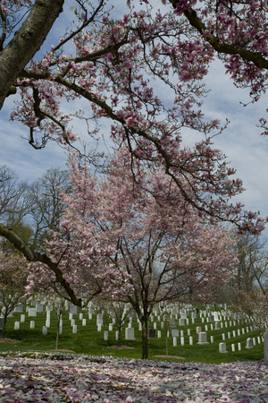 Arlington National Cemetery, Washington DC, USA photo