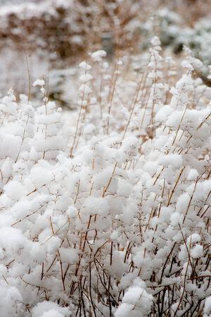 sleet: Heavy snow