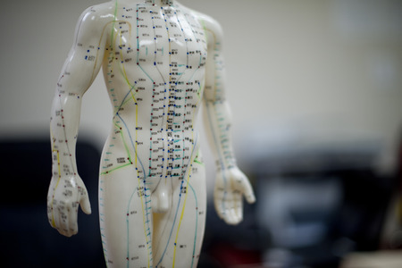meridians: Chinese acupuncture dummy   Stock Photo
