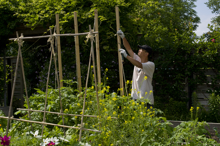 A man planting Vegetable sprout in the garden photo