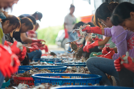 overfishing: fisherman is working with Crab