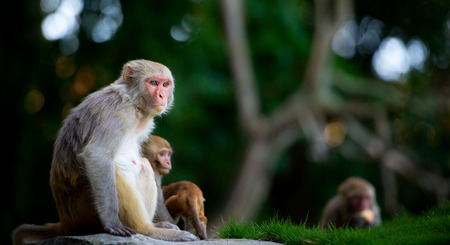 nipple young: small monkey and his mother