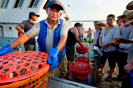 aquatic products: Fishermen fish market transactions