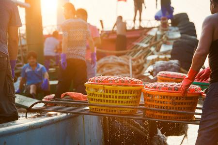 aquatic products: Fishermen fish market transactions