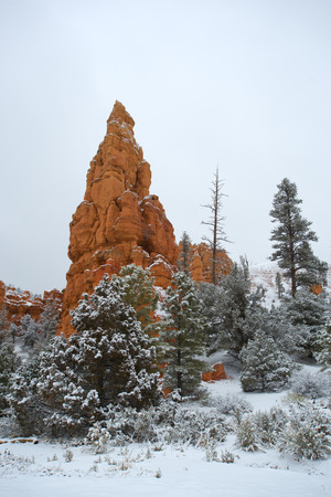 hoodoos: The fog in Bryce Canyon National Park,