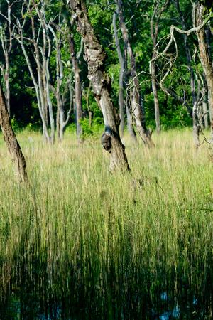 swamp: Nepal swamp