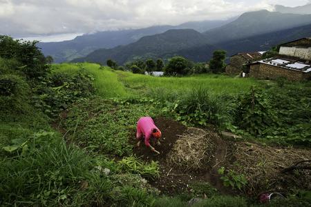 Nepalese woman in farmland