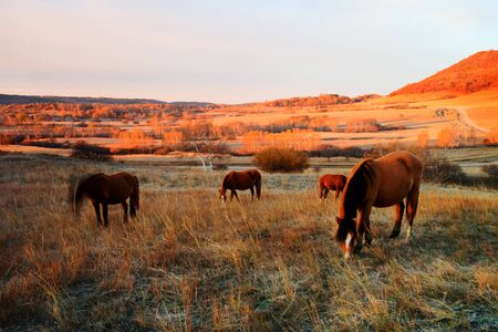 green river: Horse farm in northern China