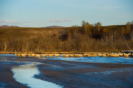 east river: Herd on pasture
