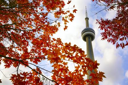 秋に赤のカエデの木、CN タワーのビュー