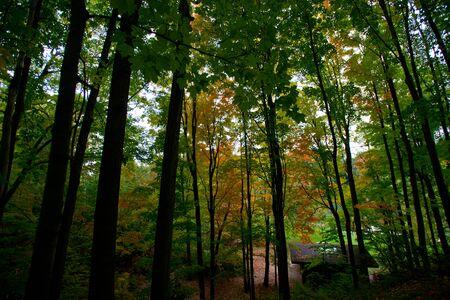 house in the park. autumn season. fallen leaves