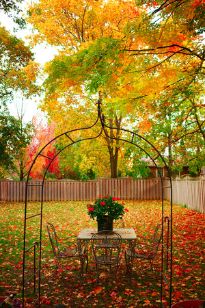 home with and yellow Autumn Maple leaves Stock Photo