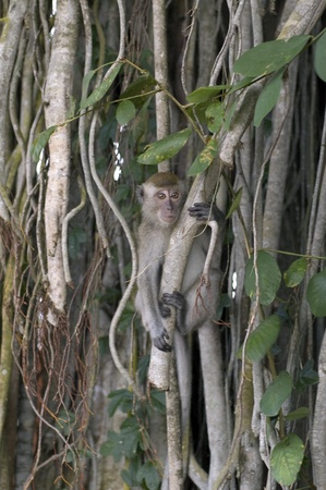 the lone young frighten monkey that hangs on to the tree