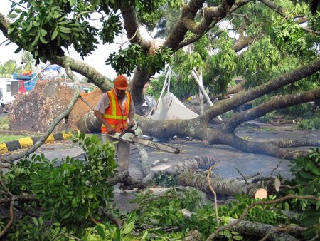 Muar, Johor, Malaysia, June 6, 2011 : A local council workers is cutting the fallen tree after being hit by a heavy storm the night before