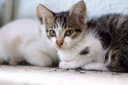 Deux jeunes chatons tension parasite � l'abri