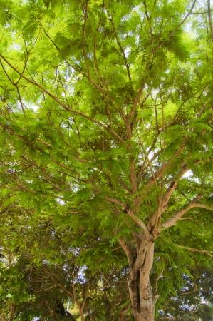 Tropical trees Stock Photo