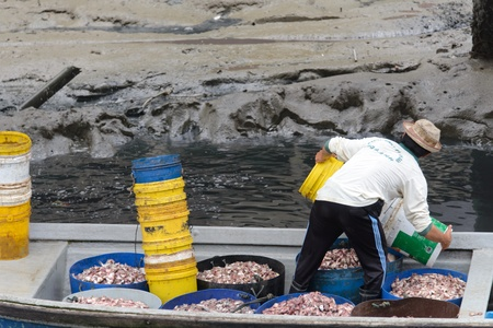 Kukup Fishing Village , Johor, Malaysia, July 10, 2013 - A fisherman pouring his fish feeding into his boat