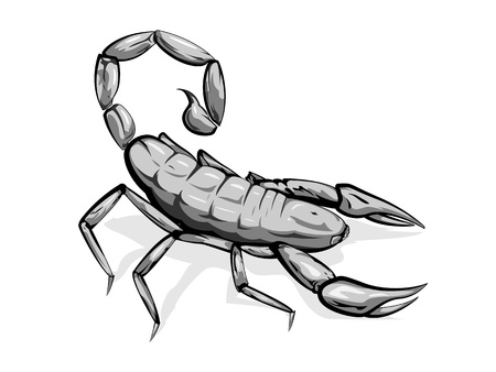 Realistic scorpion in grayscale, isolated Illustration