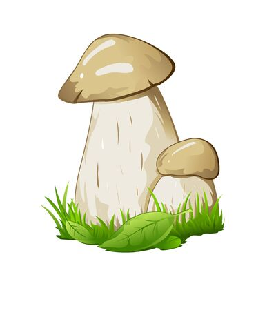 Two boletus mashrooms in green grass with small leaves, isolated Vector