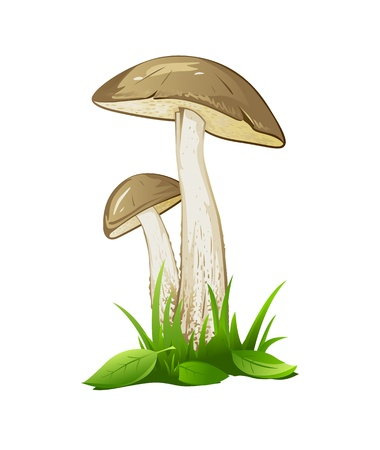 edible mushroom: Two brown mashrooms in green grass with small leaves, isolated Illustration