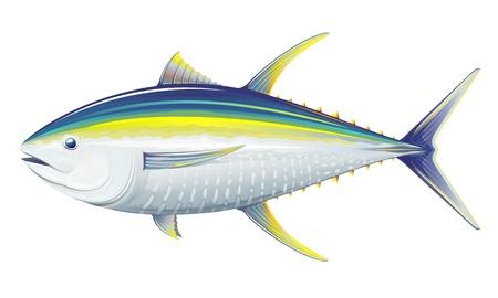 キハダマグロ、白い背景の上の現実的な海の魚のイラスト  イラスト・ベクター素材