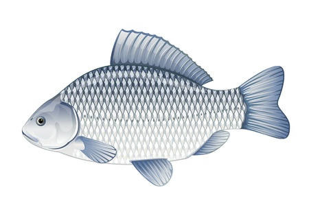 common carp: Realistic crucian carp, illustration with transparent objects, isolated