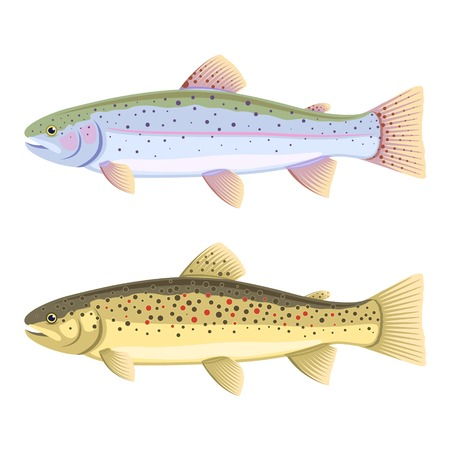 truchas: Conjunto de dos peces, la trucha arco iris y trucha marrón, aislado
