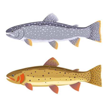 brown trout: Set of two fish, lake trout and cutthroat trout, isolated