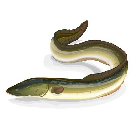 Poissons réaliste anguille européenne