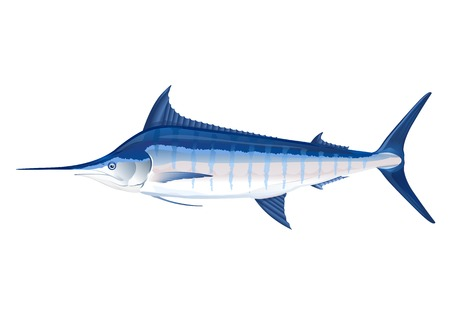 Blue marlin fish in profile,  make transparent objects, isolated