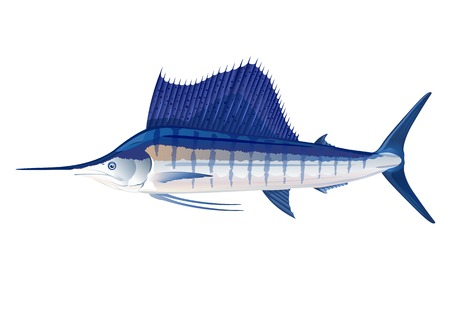 Atlantic sailfish in profile, eps10 illustration make transparent objects, isolated
