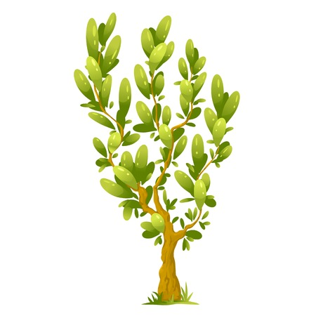 tall tree: One small cartoon tree with big elliptical leaves, isolated