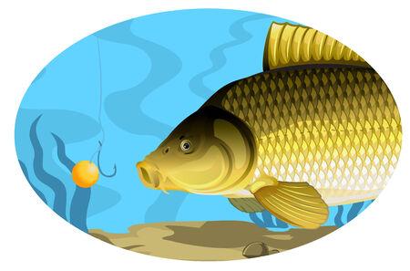 pez carpa: La carpa común la captura de cebo Vectores