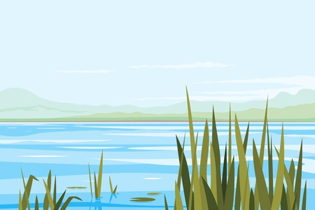 Bulrush plants in river, fishing place, nature landscape