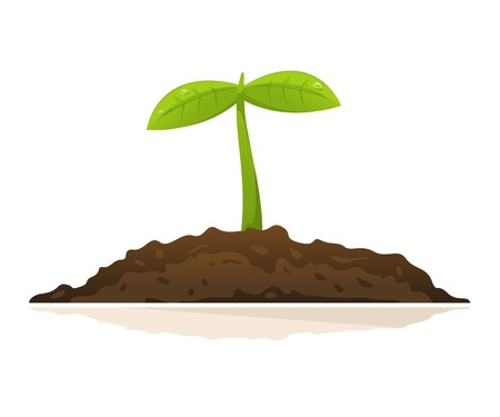 One small green plant with leaves growing in ground, isolated