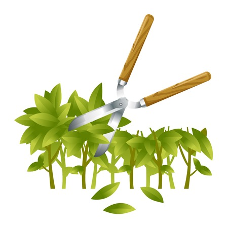 Garden shears trimming green branch of bushes, gardening tool equipment, spring work, isolated