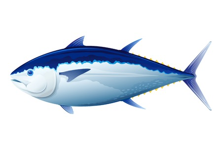 Atlantic bluefin tuna realistic sea fish illustration isolated