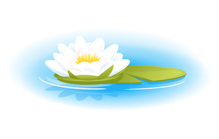 One white water lily with green leaf on blue water